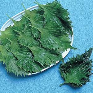 野菜の種/種子 青シソ・しそ 10ml(メール便可能)タキイ種苗|vg-harada