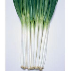 野菜の種/種子 ホワイトタイガー・ねぎ 1dl缶入(大袋)タキイ種苗 vg-harada