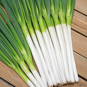 野菜の種/種子 初夏一文字・ねぎ 1dl缶入(大袋)タキイ種苗|vg-harada