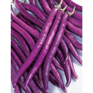 野菜の種/種子 マー坊・ナス 茄子 なす 500粒(メール便可能)サカタのタネ 種苗|vg-harada