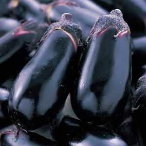 野菜の種/種子 ごちそう・ナス 茄子 なす 0.6ml (メール便可能)サカタのタネ 種苗|vg-harada