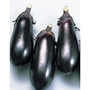 野菜の種/種子 黒福・ナス 茄子 なす 20ml(メール便可能/大袋)サカタのタネ vg-harada