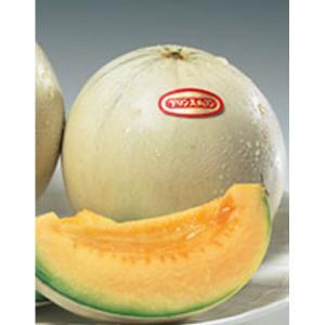野菜の種/種子 プリンス・メロン 100粒(メール便可能/大袋)サカタのタネ|vg-harada