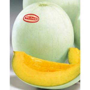 野菜の種/種子 プリンスPF・メロン 100粒(メール便可能/大袋)サカタのタネ|vg-harada