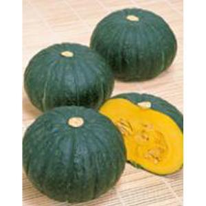 野菜の種/種子 メルヘン・カボチャ かぼちゃ 6.5mlメール便発送)サカタのタネ 種苗 vg-harada