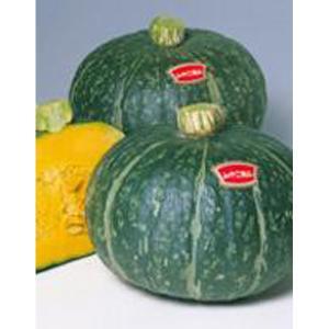 野菜の種/種子 みやこ・カボチャ かぼちゃ 6.5ml(メール便発送)サカタのタネ 種苗 vg-harada