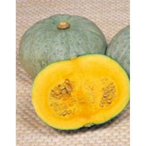 野菜の種/種子 雪化粧200・カボチャ かぼちゃ 100粒(メール便発送)サカタのタネ 種苗 vg-harada