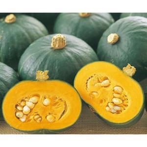 野菜の種/種子 栗坊・カボチャ かぼちゃ 2dl缶入(大袋)サカタのタネ|vg-harada