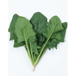 野菜の種/種子 ジャスティス・ほうれんそう M・3万粒 プライマックス種子(大袋)サカタのタネ|vg-harada