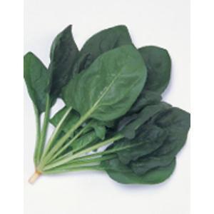 野菜の種/種子 カイト・ほうれんそう M・3万粒 プライマックス種子(大袋)サカタのタネ 種苗|vg-harada