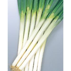野菜の種/種子 冬扇2号・ねぎ 20ml(メール便可能)サカタのタネ|vg-harada