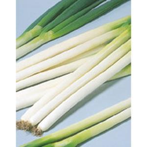 野菜の種/種子 冬扇3号・ねぎ 6000粒 ペレット種子(大袋)サカタのタネ|vg-harada