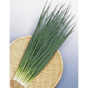 野菜の種/種子 竹千代・ねぎ 20ml(メール便発送)サカタのタネ 種苗 vg-harada
