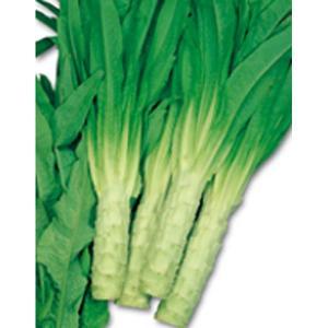 野菜の種/種子 やまくらげ ケルン 茎レタス 1.2ml(メール便発送)サカタのタネ 種苗|vg-harada