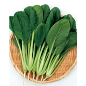 野菜の種/種子 つなしま・コマツナ 20ml(メール便発送)サカタのタネ 種苗|vg-harada