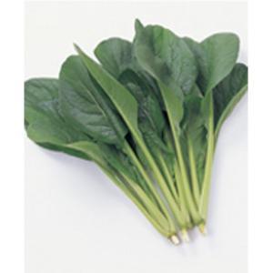 野菜の種/種子 はまつづき・コマツナ 2dl(大袋)サカタのタネ|vg-harada