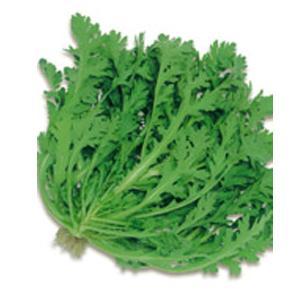 野菜の種/種子 さとにしき 春菊・シュンギク 約2600粒(メール便可能)サカタのタネ|vg-harada