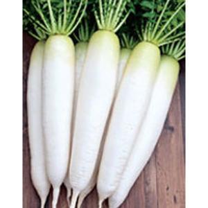 野菜の種/種子 春自慢・だいこん ダイコン 800粒(メール便可能)サカタのタネ 種苗|vg-harada