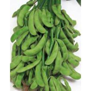 野菜の種/種子 ふさみどり・えだまめ 1dl(メール便可能)サカタのタネ|vg-harada