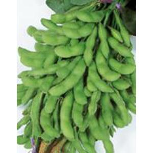 野菜の種/種子 味源・えだまめ 約32粒(メール便可能)サカタのタネ|vg-harada