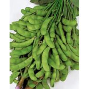 野菜の種/種子 夏の声・えだまめ 約31粒(メール便発送)サカタのタネ 種苗 vg-harada