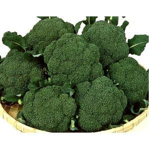 野菜の種/種子 サマードーム・ブロッコリー 2000粒(大袋)サカタのタネ|vg-harada