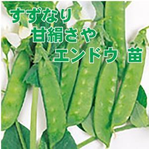 野菜の苗 すずなり甘絹さや エンドウ苗 えんどう苗 4ポット入りセット |vg-harada