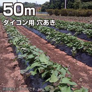 農業用マルチシート マルチフィルム ダイコン用 穴あき 黒 50m (幅95cm/薄さ0.02mm/穴径6cm×2列千鳥)農業資材|vg-harada