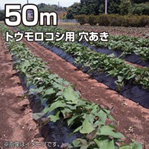 農業用マルチシート マルチフィルム トウモロコシ用 穴あき 黒 50m(幅95cm/薄さ0.02mm/穴径4.5cm×2列千鳥)農業資材|vg-harada