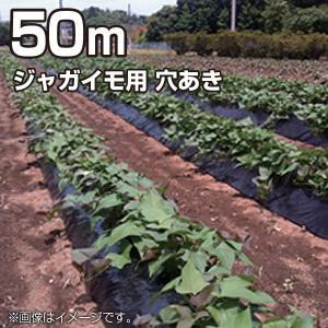 農業用マルチシート マルチフィルム ジャガイモ用 穴あき 黒 50m(幅95cm/薄さ0.02mm/穴径8cm 並列)農業資材|vg-harada