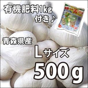 お買い得♪野菜・種/苗 ニンニク にんにく 種子 国産 青森県産 福地ホワイト Lサイズ 500g+肥料1kg付き|vg-harada