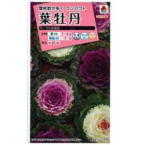 花の種 葉牡丹[F1つぐみ混合] 0.5ml(メール便発送) vg-harada