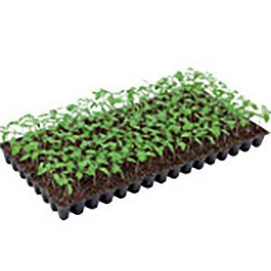 野菜の種/種子 シャットアウト・台木トマト 1000粒 プライマックス種子(大袋)サカタのタネ 種苗|vg-harada