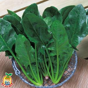 野菜の種/種子 福兵衛(ふくべえ)ほうれんそう ホウレンソウ 法蓮草 3万粒(大袋)タキイ種苗|vg-harada