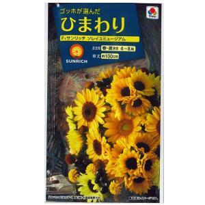 花の種 ひまわり[F1サンリッチ ソレイユミュージアム] 3ml(メール便発送) |vg-harada