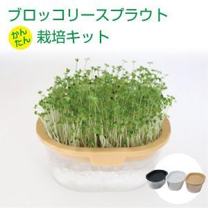 ブロッコリースプラウト 栽培キット(セット)|vg-harada