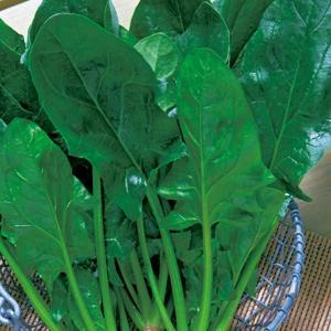 野菜の種/種子 福兵衛 ほうれんそう エボプライム種子45ml(メール便発送)タキイ種苗|vg-harada
