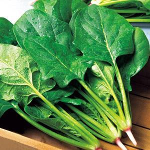 野菜の種/種子 タフスカイ ほうれんそう エボプライム種子45ml(メール便発送)タキイ種苗|vg-harada