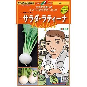 野菜の種/種子 サラダ・ラティーナ /ラーパ・カブ・イタリア野菜 200粒 (メール便発送)トキタ種苗|vg-harada