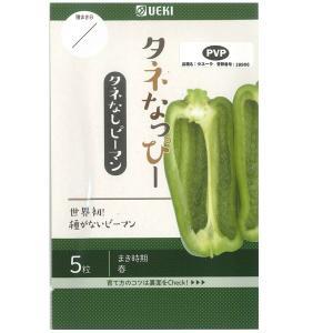 野菜の種/種子 タネなっぴー・種なしピーマン 5粒(メール便発送)横浜植木|vg-harada