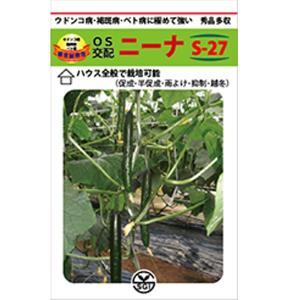 野菜の種/種子 ニーナ S-27  350粒 キュウリ きゅうり (メール便発送/大袋)|vg-harada