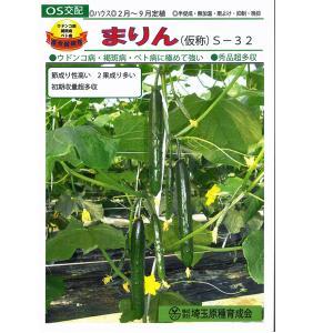 野菜の種/種子 まりん(仮称) S-32  350粒 キュウリ きゅうり (メール便発送/大袋)|vg-harada