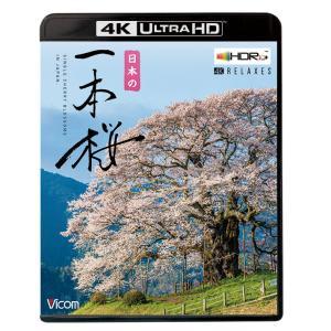 日本の一本桜 4K Ultra HDブルーレイ ビコムストア|vicom-store