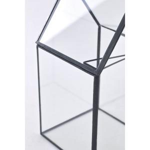 SPICE OF LIFE ケース ガラステラリウム トール Sサイズ 10×9.5×18.5cm 多肉植物 コケ エア vivaldistr