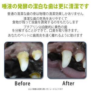 インテリジェント酵素入り猫犬用歯磨き粉 80g歯周病ケア、自宅の歯石取り配合用はみがき 、口臭 サプリ vivaldistr