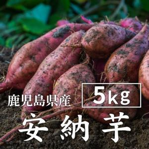 安納芋 紅 5kg(生芋・大小混在) 送料無料 安納芋 さつまいも あんのういも 薩摩芋 蜜芋|wa-zeka