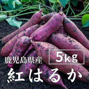 紅はるか 5kg(生芋・大小混在) べにはるか さつまいも 紅はるか 薩摩芋 サツマイモ 蜜芋 安納芋|wa-zeka
