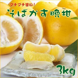 河内晩柑 3kg 熊本県産 お取り寄せ お土産 ギフト プレゼント 特産品 名物商品|wagamachi-tokusan