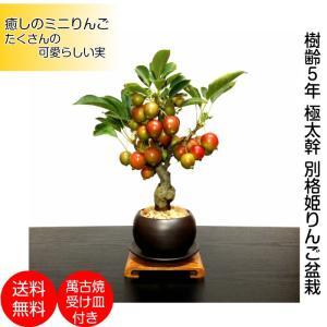 盆栽 ミニ 姫りんご ミニ盆栽 初心者 室内 癒し 趣味 盆栽 ギフト 誕生日 おしゃれ盆栽