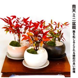 盆栽 ミニ 南天盆栽 縁起物盆栽 盆栽 ギフト プレゼント ミニ観葉 風水植物